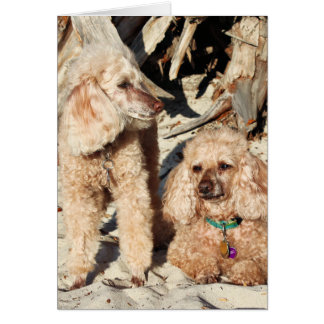 Leach - Poodles - Romeo Remy Card