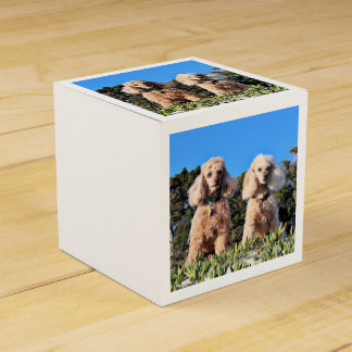 Leach - Poodles - Romeo Remy Favour Box