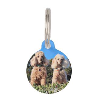 Leach - Poodles - Romeo Remy Pet ID Tag