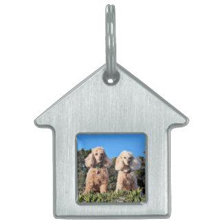 Leach - Poodles - Romeo Remy Pet Name Tag