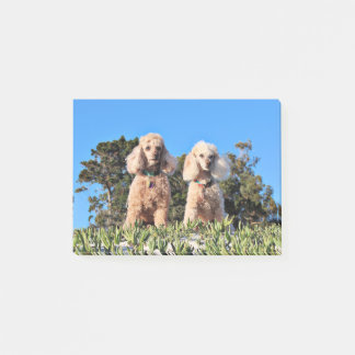 Leach - Poodles - Romeo Remy Post-it Notes