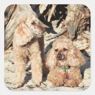 Leach - Poodles - Romeo Remy Square Sticker