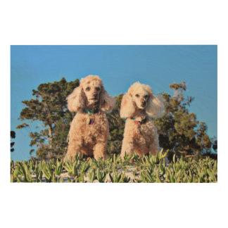 Leach - Poodles - Romeo Remy Wood Print