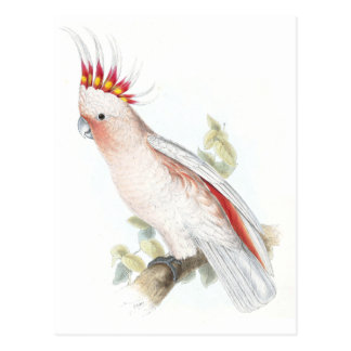 Leadbeater's Cockatoo by Edward Lear Postcard