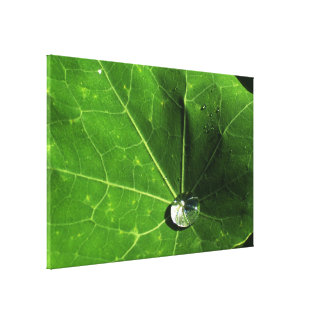 Leaf and Droplet Stretched Canvas Print