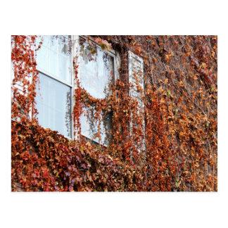 Leaf And Vine Covered Window Postcard