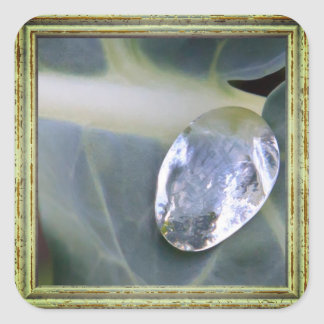 Leaf And Water Drop Square Sticker