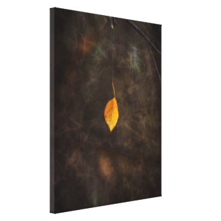 Leaf Caught by Spider Web Stretched Canvas Prints