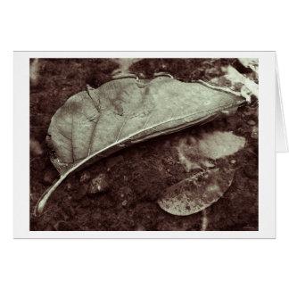 leaf fling greeting card
