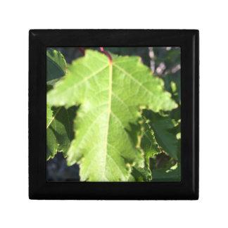 Leaf Gift Box