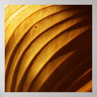 Leaf in Golden Light Photo Poster Print