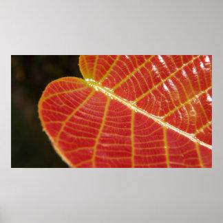 Leaf in sunlight poster