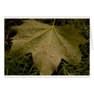 Leaf in the Dew of the Morning Greeting Card