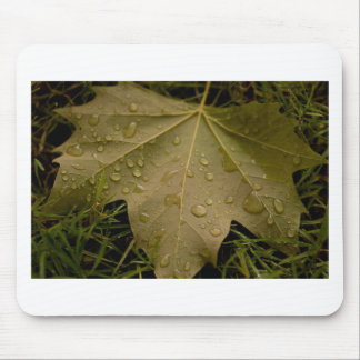 Leaf in the Dew of the Morning Mouse Pad