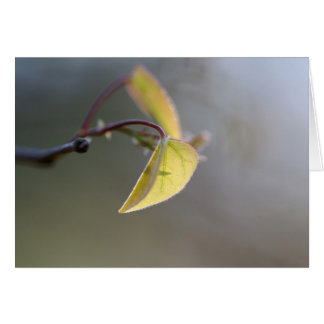 Leaf in the Fog Note Cards