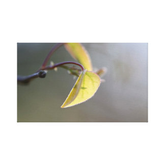 Leaf in the Fog Wrapped Canvas Canvas Prints