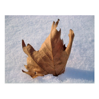 Leaf in the snow,when autumn meets the winter postcard