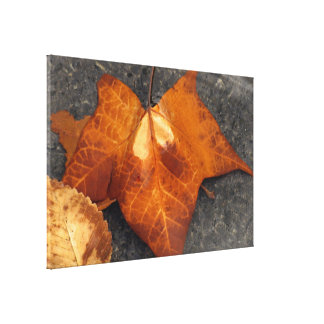 Leaf in the Water Gallery Wrapped Canvas
