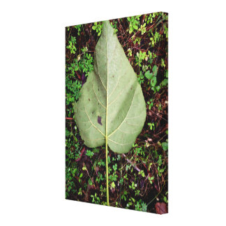 Leaf in the Woods on Canvas Canvas Print