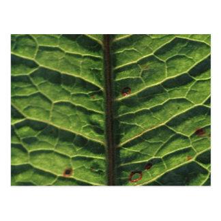 leaf.jpg postcard