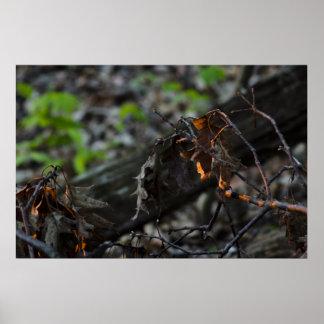 leaf-litter-2012-04-30-a print