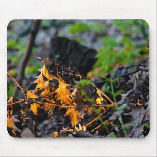 leaf-litter-2012-04-30-b mouse pad