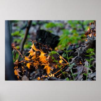 leaf-litter-2012-04-30-b print