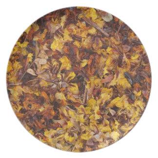 Leaf litter photo plate