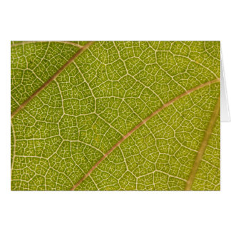 Leaf Macro Greeting Card