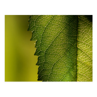 Leaf Macro Postcard