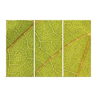 Leaf Macro Triptych Canvas Wall Art Gallery Wrap Canvas