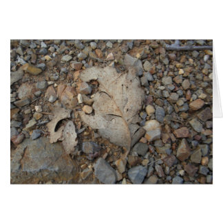 Leaf On Gravel Greeting Card