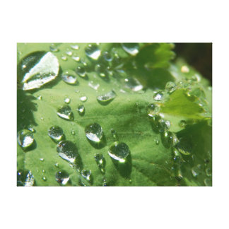Leaf raindrops gallery wrapped canvas