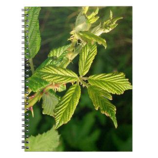 Leaf spiral photo note book