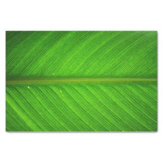 Leaf Tissue Tissue Paper