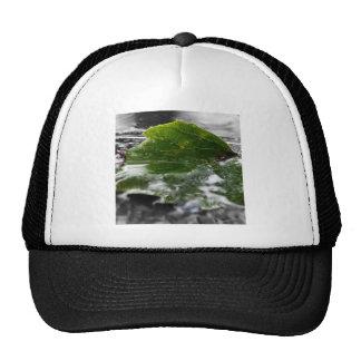 Leaf Water Close Up Cap