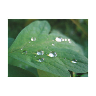 Leaf with Raindrops Gallery Wrapped Canvas