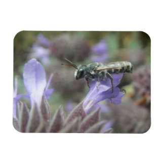 Leafcutter Bee Flexible Photo Magnet