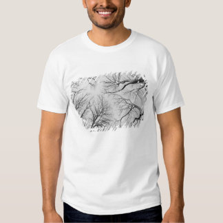 Leafless Trees in Thiepval Wood T-shirts