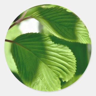 Leafy Green Classic Round Sticker