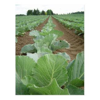Leafy Greens, Farming Postcard