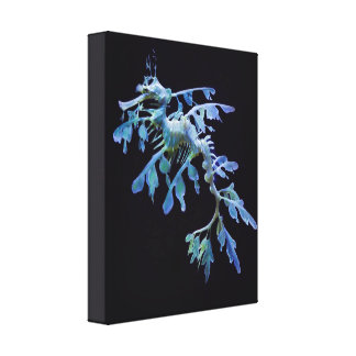 Leafy Sea Dragon Wrapped Canvas Print