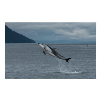 Leaping Dolphin Poster