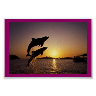 Leaping Dolphins Posters