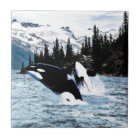 Leaping Orca Tile
