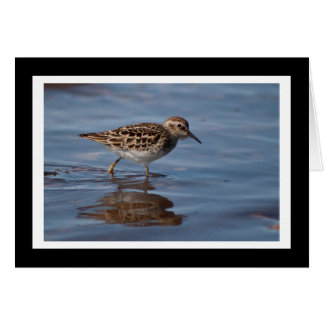 Least Sandpiper Blank Greeting Card