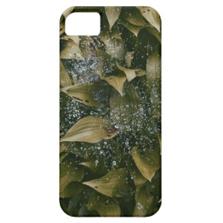 Leaves After Rain Case For The iPhone 5