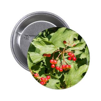 Leaves and berries  viburnum opulus close-up 6 cm round badge