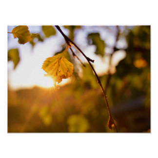 Leaves at sunset poster