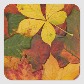 Leaves in Autumn Square Sticker